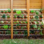 контейнерный сад в ломоносовской усадьбе