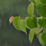 Сбор дождевой воды
