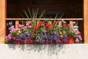 цветы для южных балконов