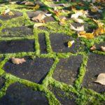 трава для дорожек сада и зон отдыха