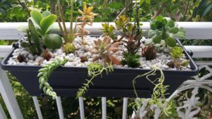 растения для жарких условий