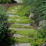 трава для газонов парковок стоянок  зон отдыха