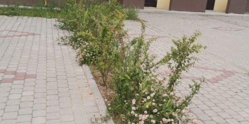 Кустарник перед домом в Ломоносовской усадьбе